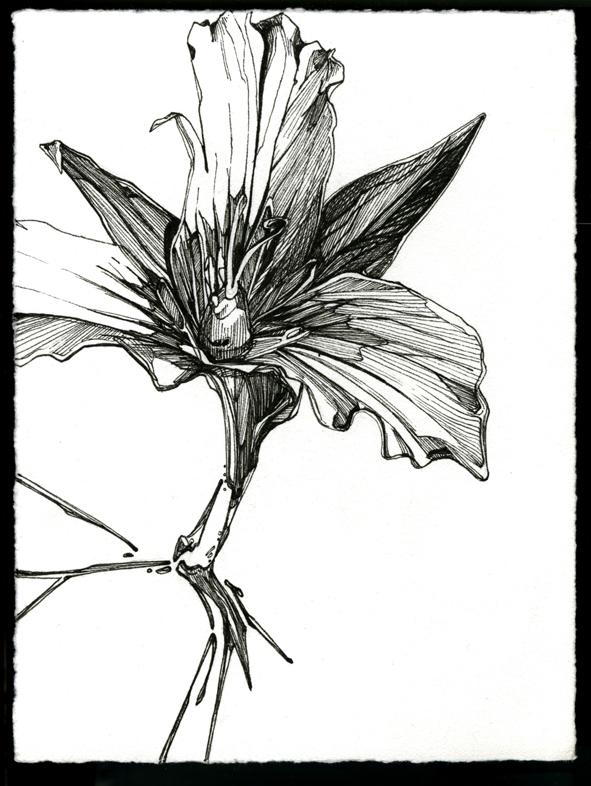 p_54.jpg