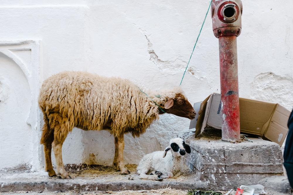 Maroc_Web-86.jpg