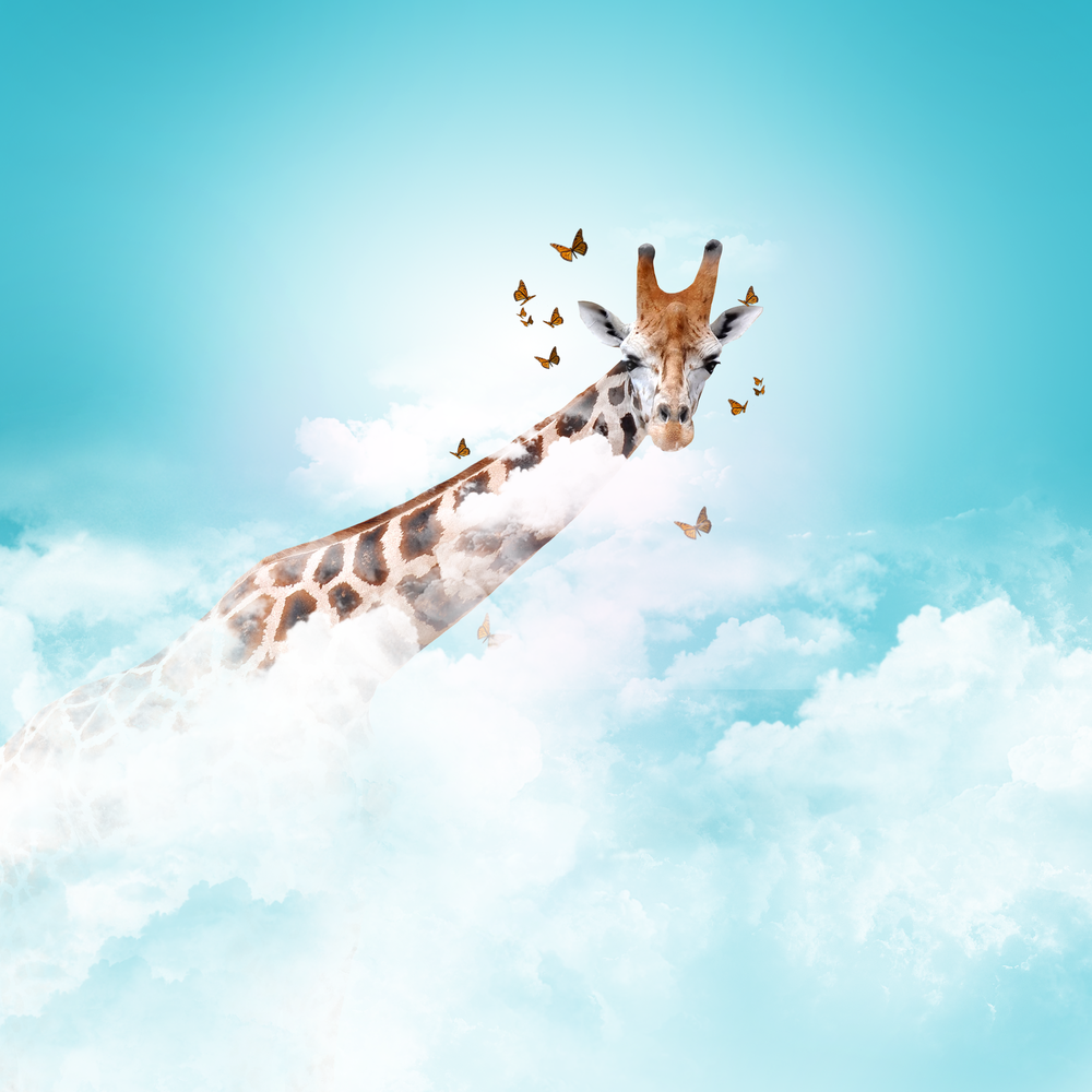 headintheclouds.png