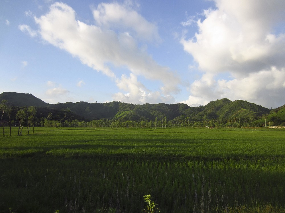 Lombok Rice Paddies (Indonesia)