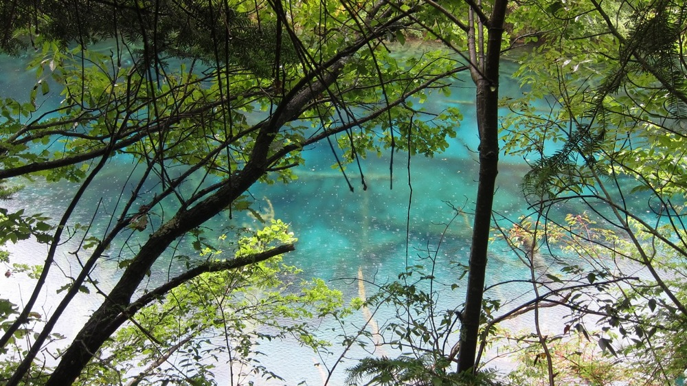 how to get to jiuzhaigou from shanghai
