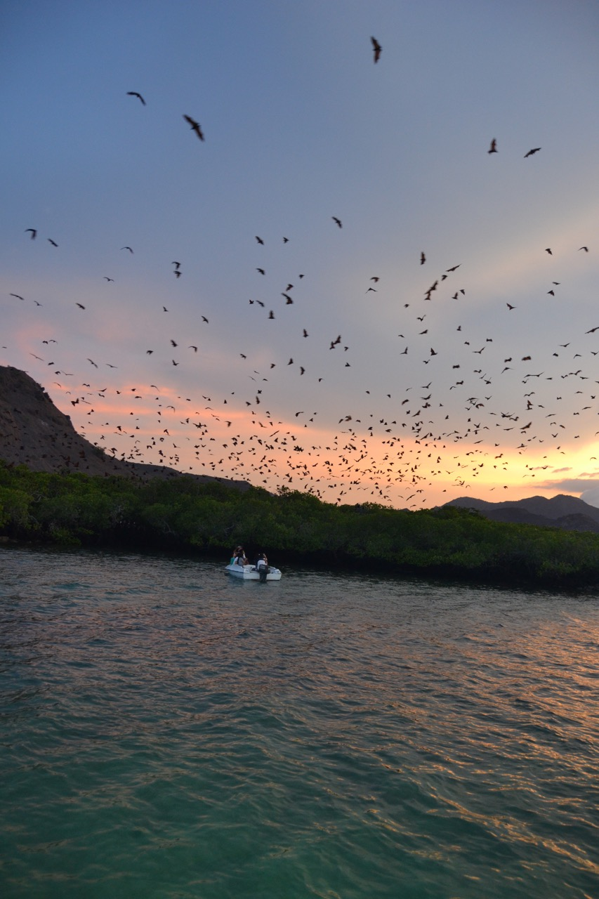 Visiting Komodo National Park And 2 Days Sailing On The Flores Sea Day Island Rinca