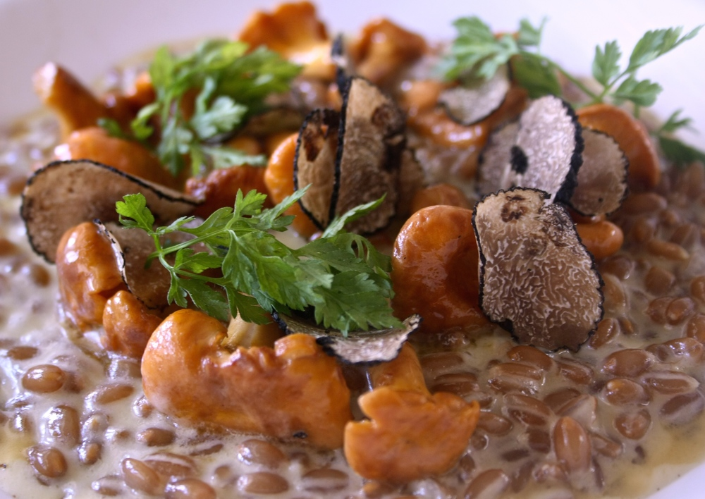 ORGANIC SPELT GRAIN RISOTTO WITH GIROLLE MUSHROOMS — The Wee Restaurant