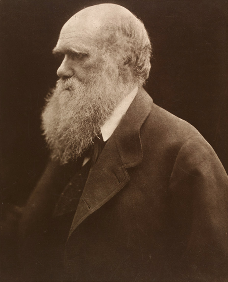 Charles Darwin, Julia Margaret Cameron, 1868, printed 1875, carbon print from copy negative. Museum no. 14-1939 © Victoria and Albert Museum, London