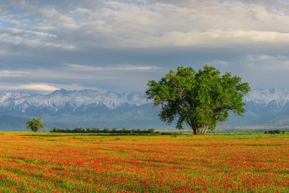 Almaty region.JPG