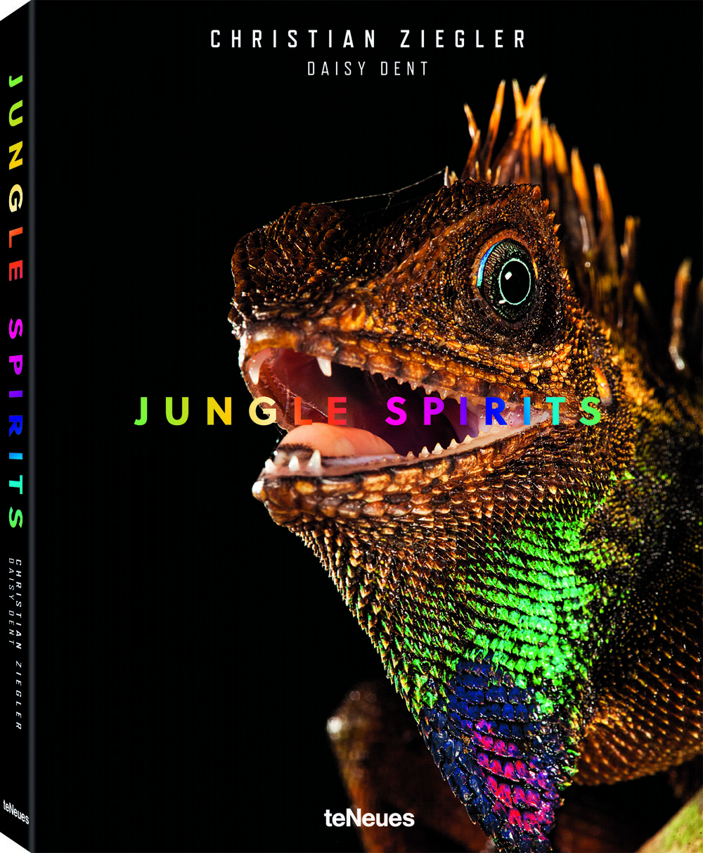 © Jungle Spirits by Christian Ziegler & Daisy Dent, published by teNeues, € 49,90, www.teneues.com, Bell's forest dragon (Gonocephalus bellii), Malaysia, Photo © 2017 Christian Ziegler. All rights reserved. www.christianziegler.photography