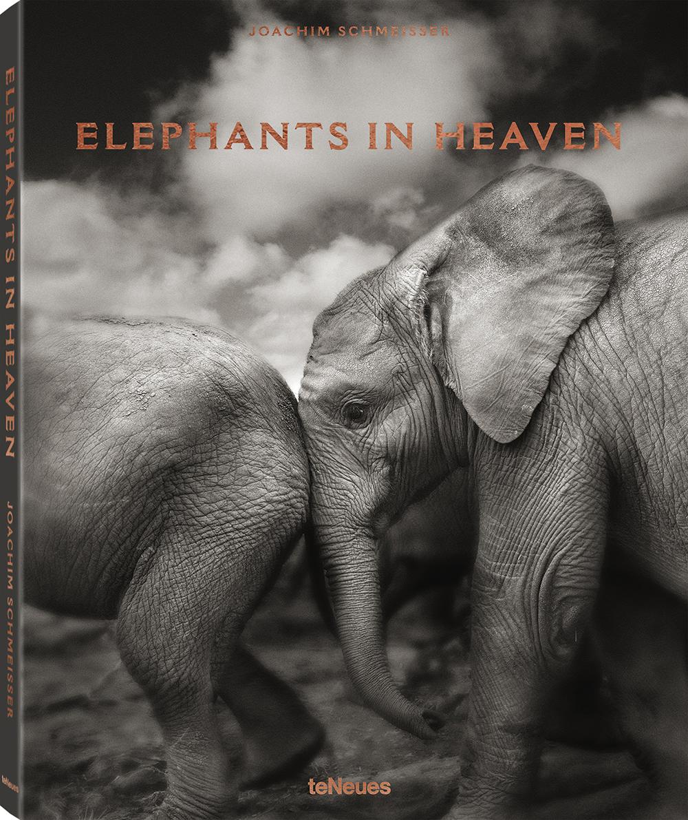 © Elephants in Heaven by Joachim Schmeisser, published by teNeues, € 59,90, www.teneues.com , Suguta, Kenya 2009, Photo © 2017 Joachim Schmeisser. All rights reserved. www.joachimschmeisser.com
