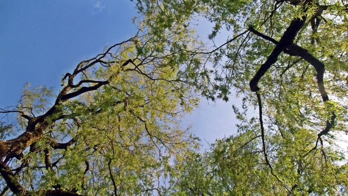 unter+Baum.jpg