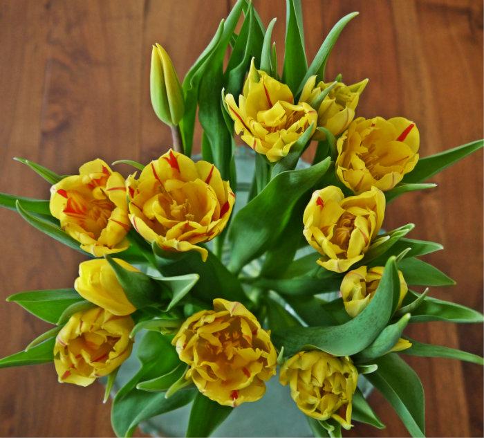 Tulpen oben.jpg