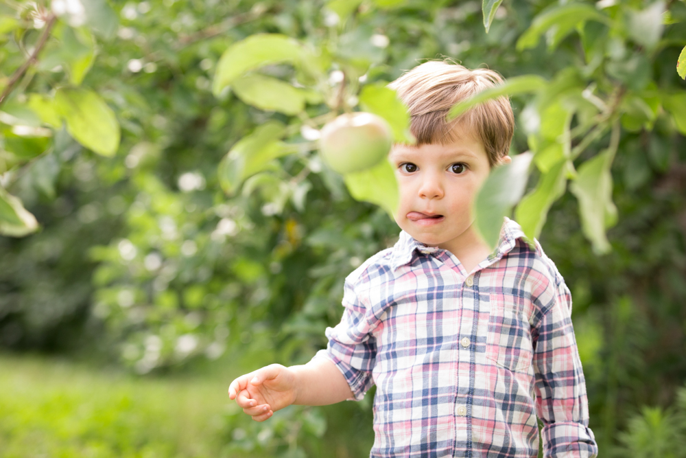 apple-picking-kids-family-photoshoot-north-andover.jpg