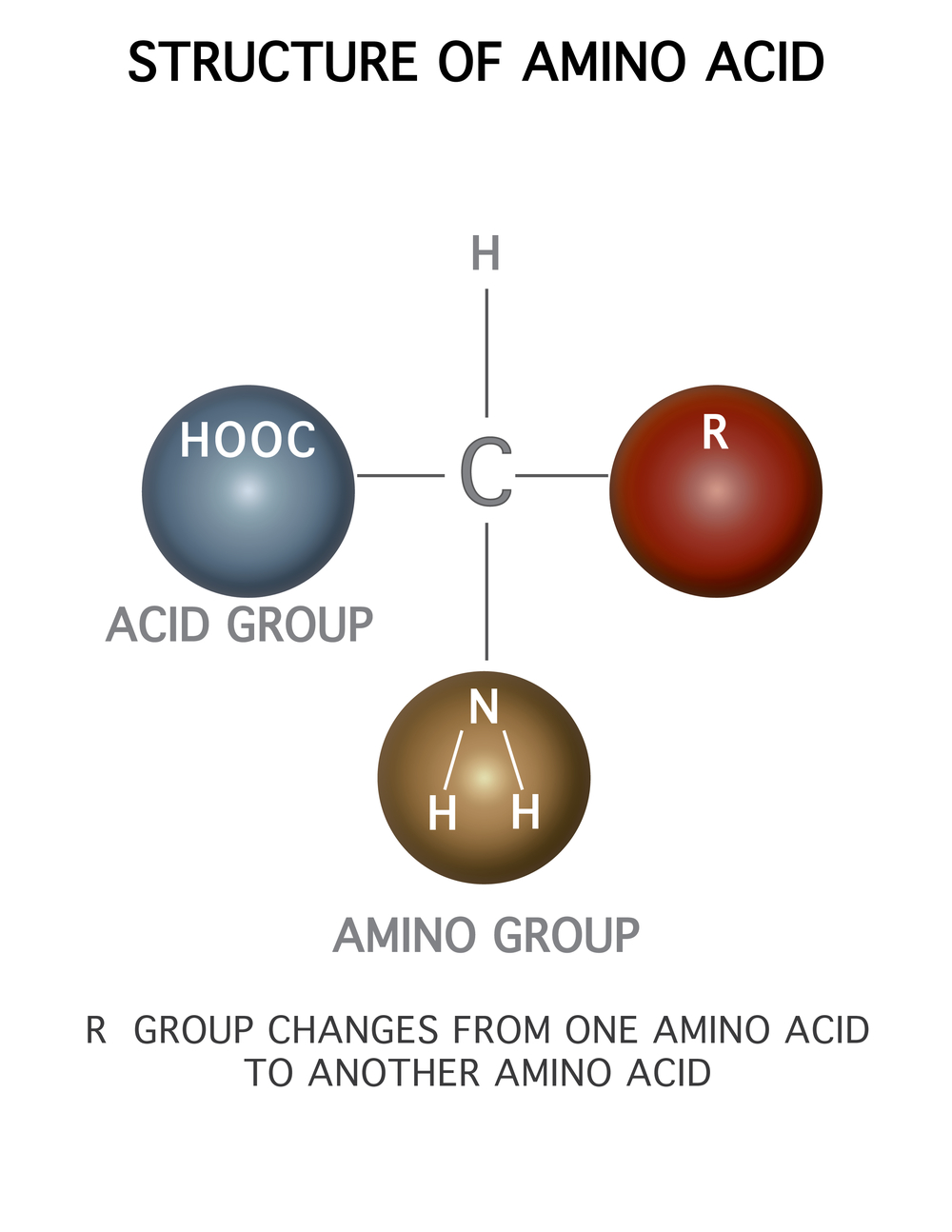 Structure of amino acid