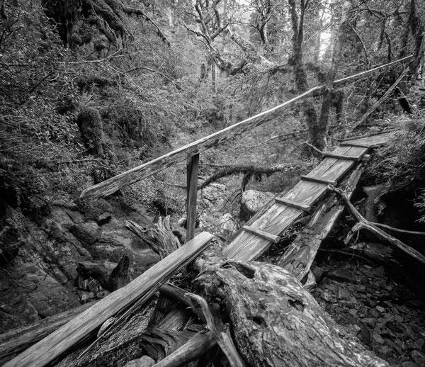 Cloud Forest Gangway