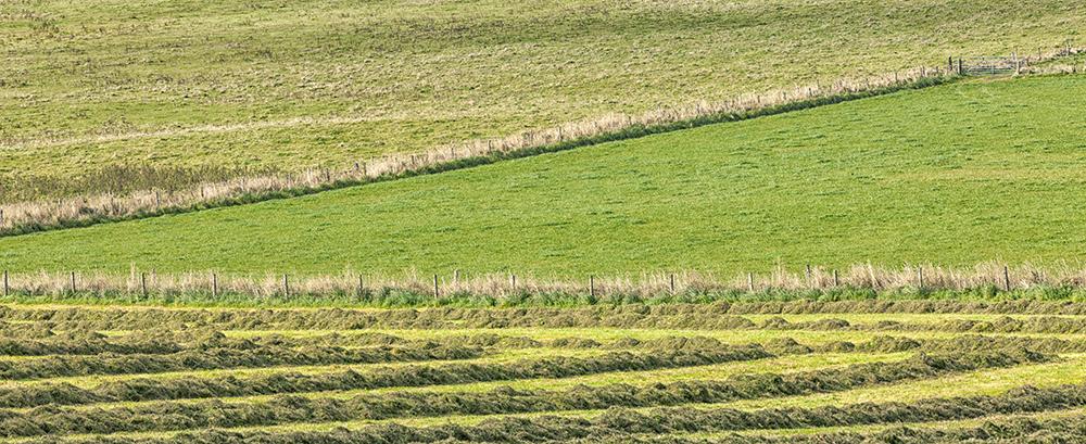 Orkney Fields