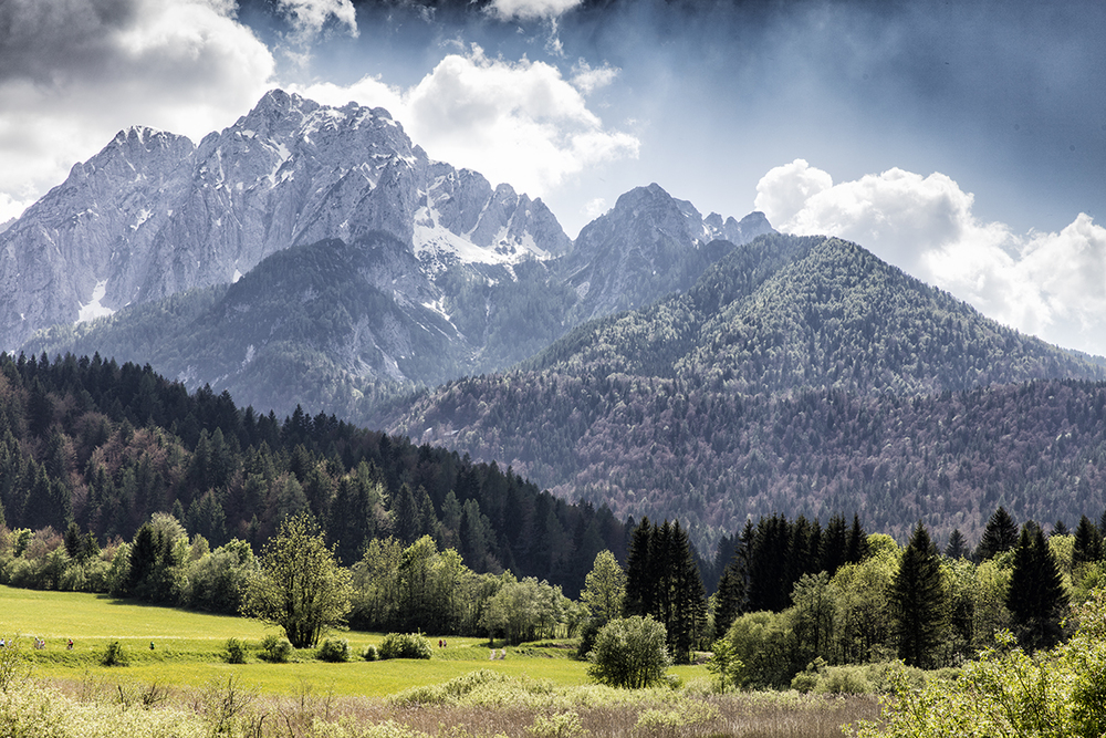 Zelenci Nature Reserve Slovenia