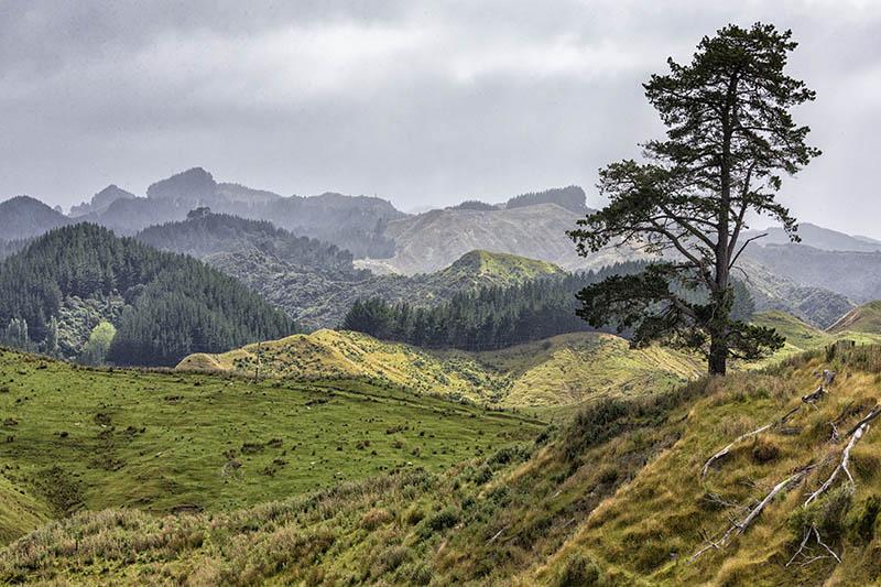 Forested Landscape Otago