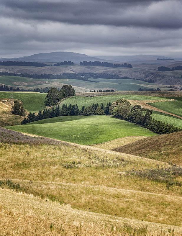 Otago Landscape NZ