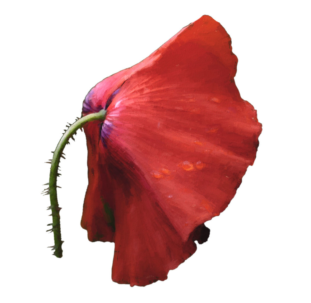 Bright Poppy - Copy.jpg