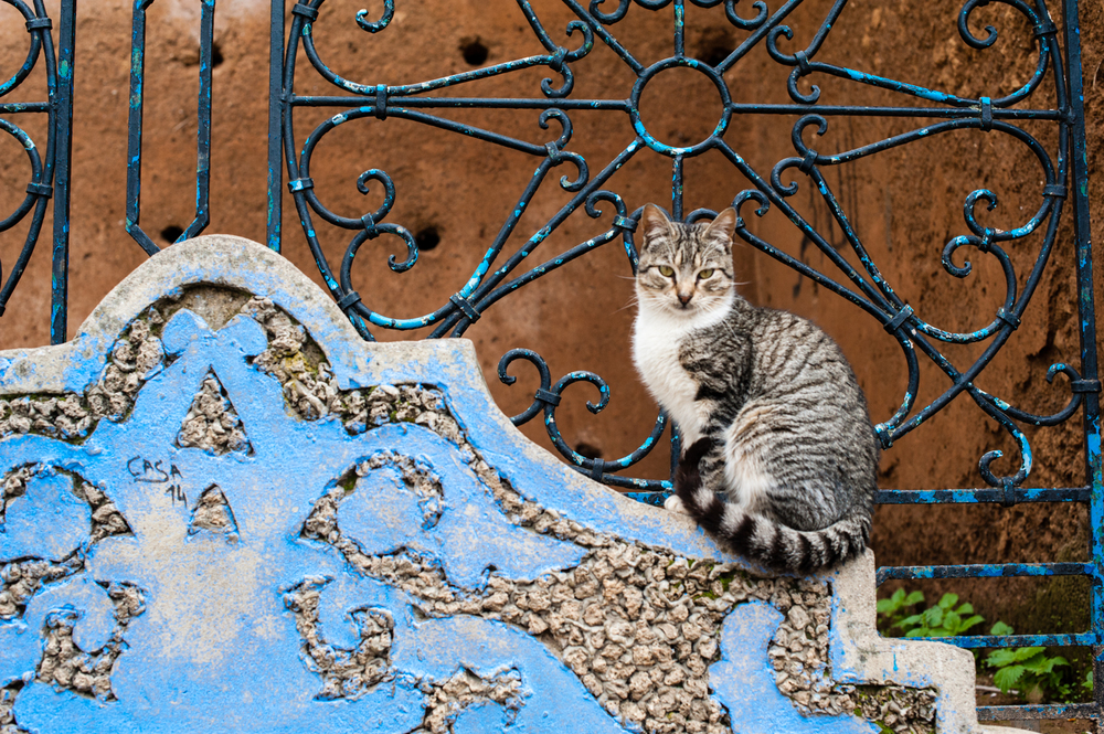 #7 - A local cat strikes a pose in Chefchaouen.