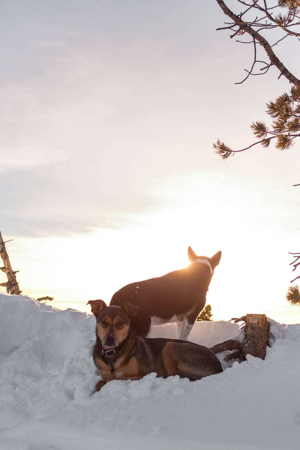 2013_02_16_LeeMetcalf_Sunset_Dogs_Web.jpg