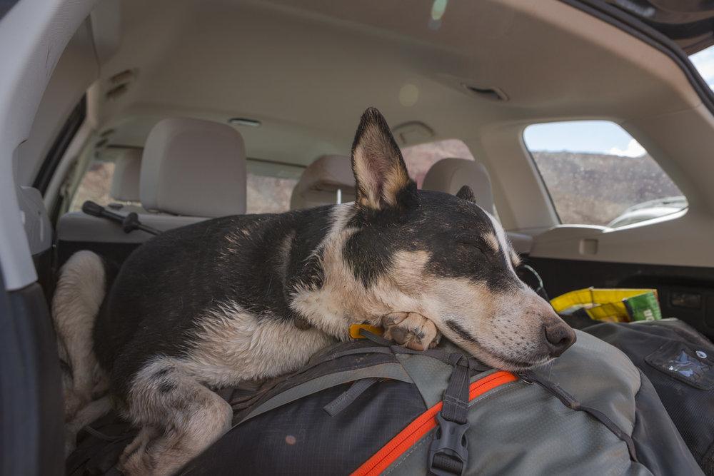 2016_Cotopaxi-desert-tired-dog-web.jpg