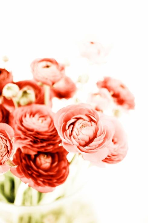 flowerred3.jpg