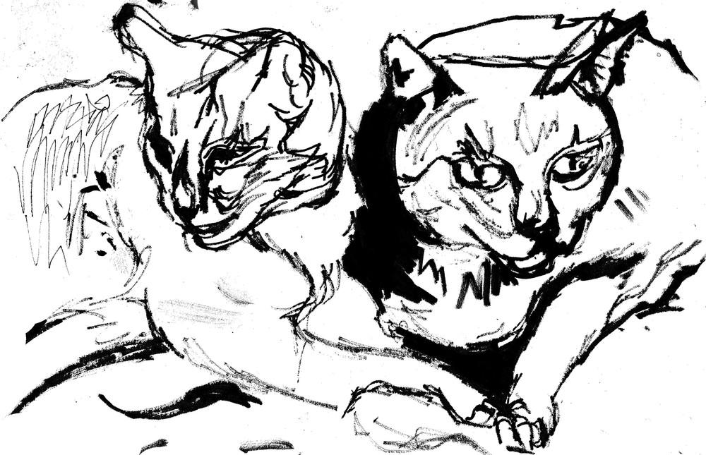 Sheba and Picasso