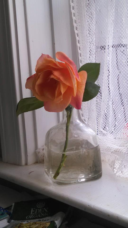 A peace rose.