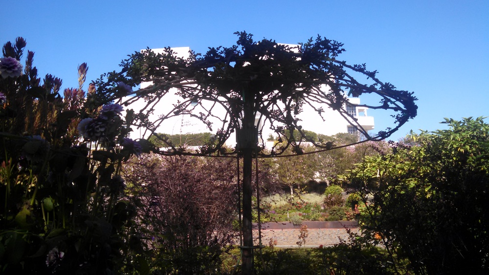 `Umbrella tree structure at the beautiful Getty gardens.