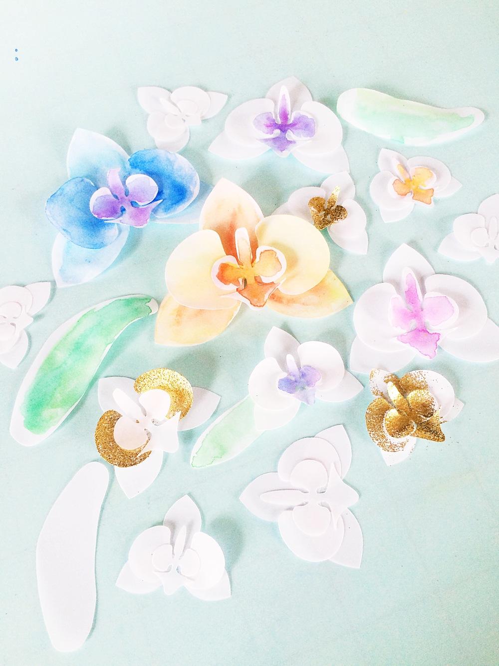 Vellum Orchids
