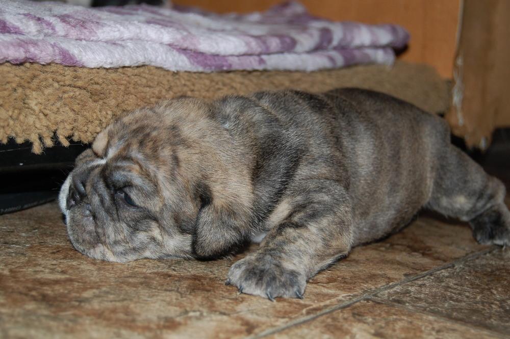 Bruno (4)