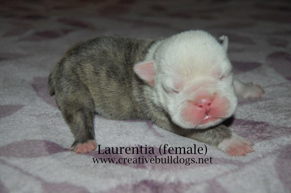 Laurentia1 9-10-16.jpg