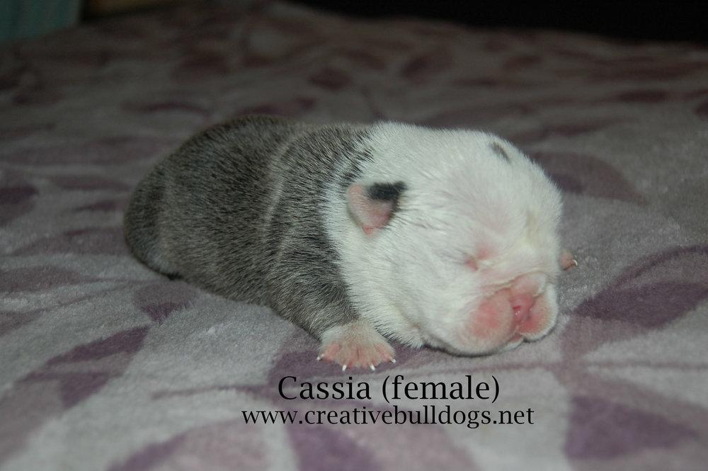 Cassia2 9-10-16.jpg