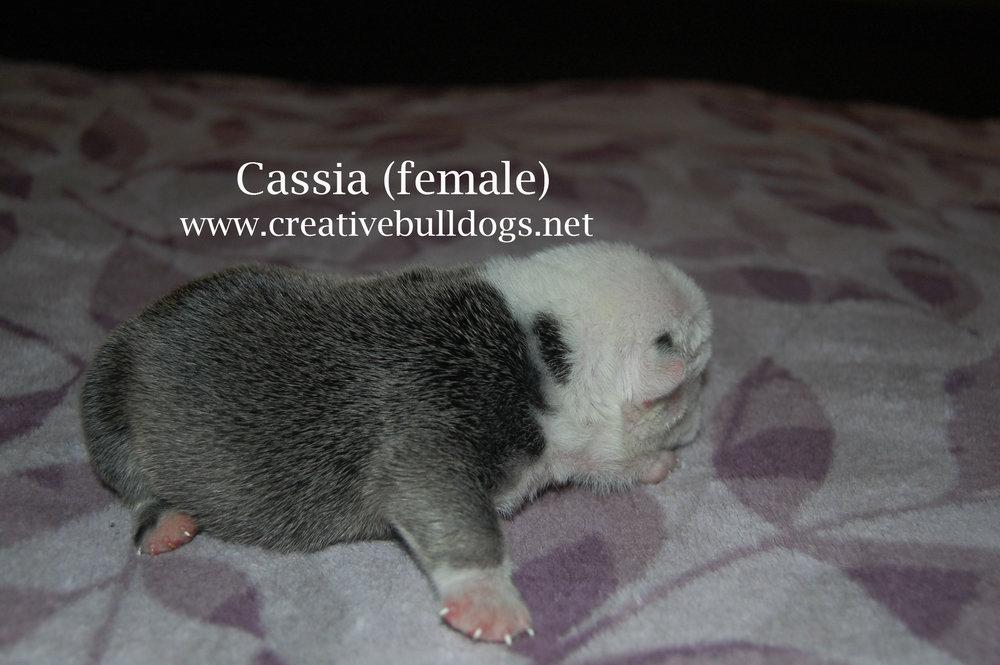 Cassia3 9-10-16.jpg