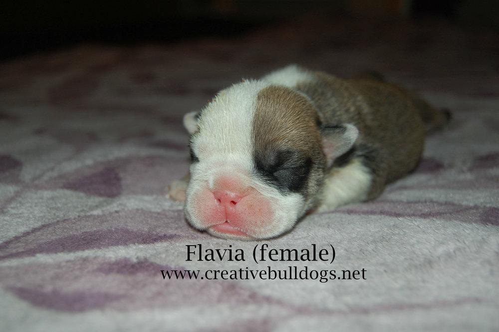 Flavia1 9-10-16.jpg
