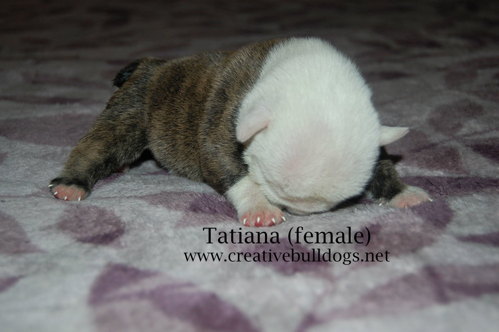 Tatiana2 9-10-16.jpg