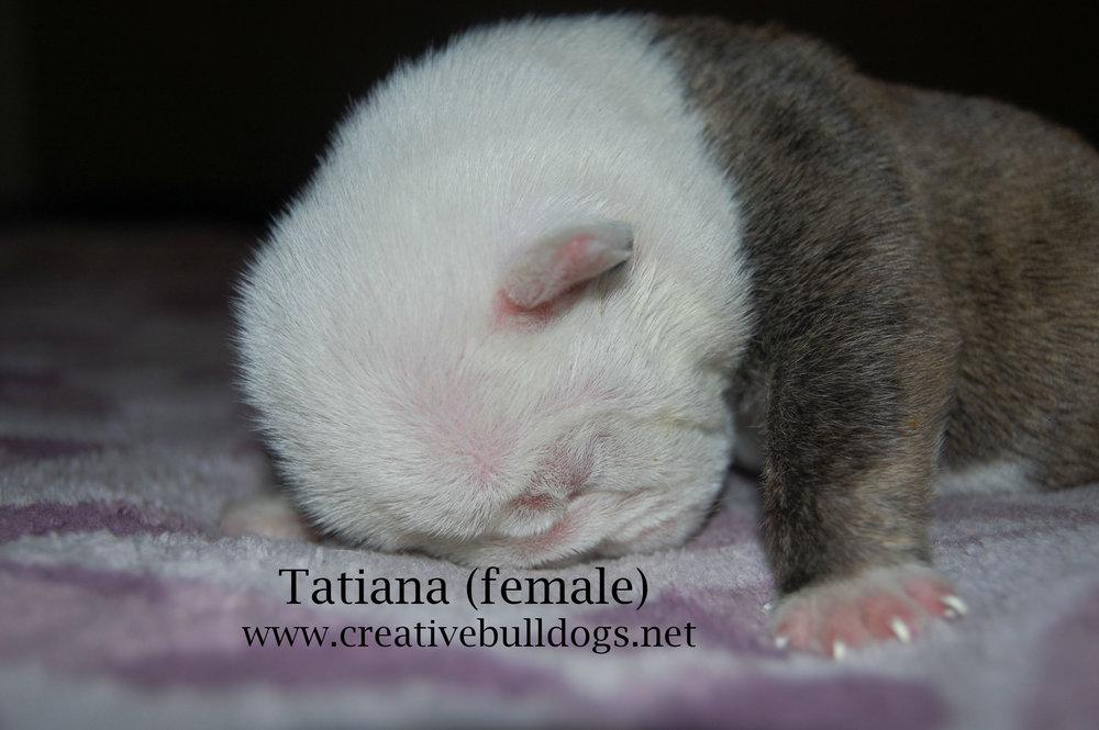 Tatiana3 9-10-16.jpg