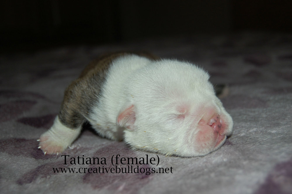 Tatiana5 9-10-16.jpg