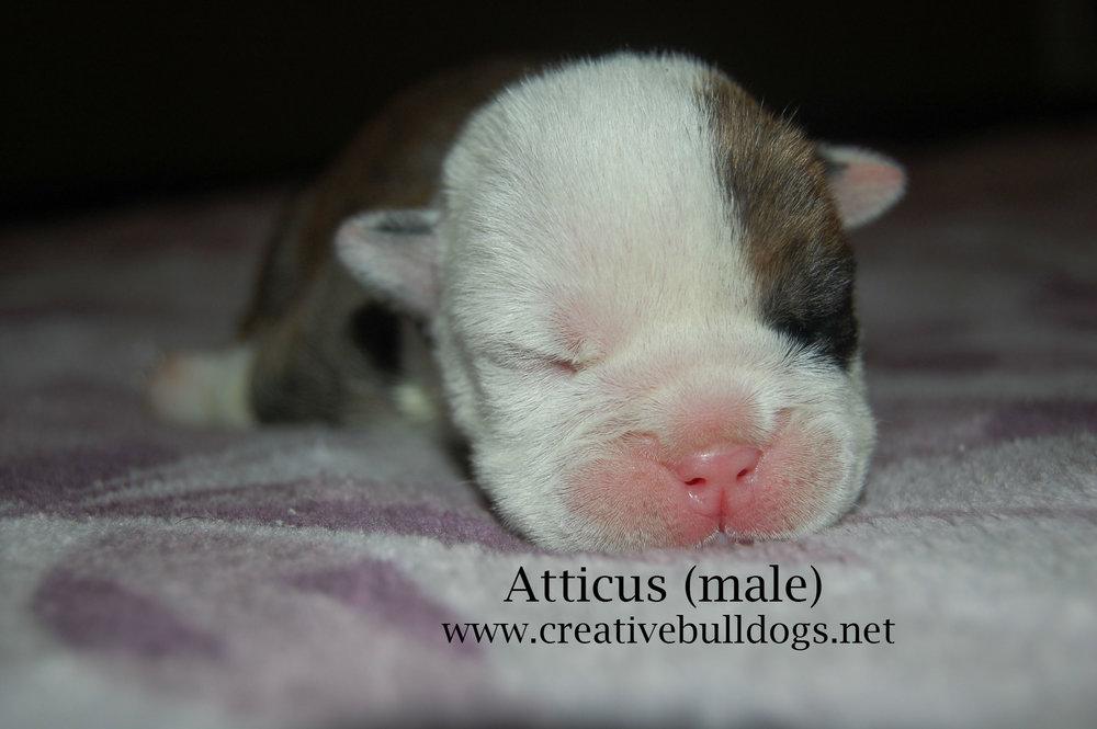 Atticus1 9-10-16.jpg