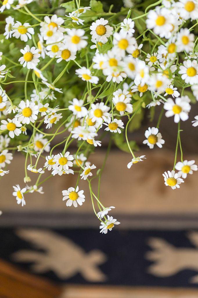 florist.png