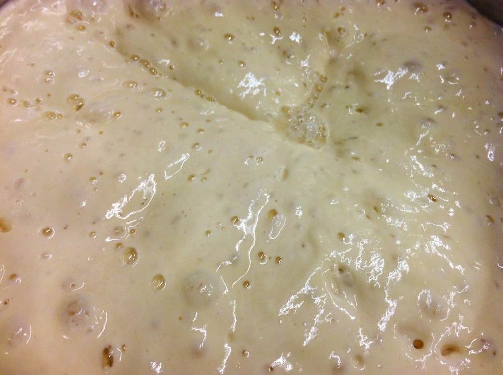 Active fermentation on Blue Heaven Leaven