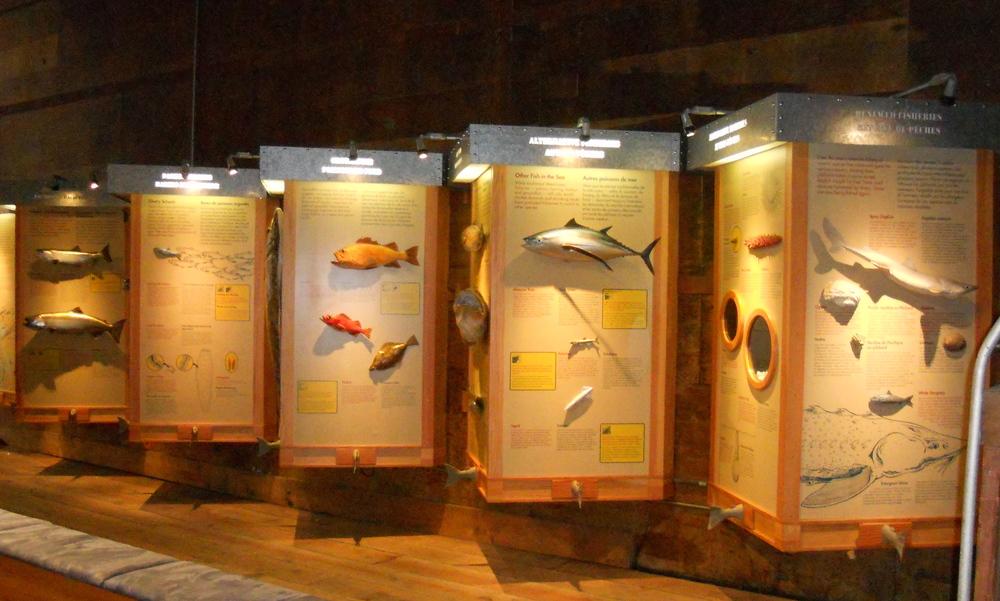GOGC fish gallery 5.JPG