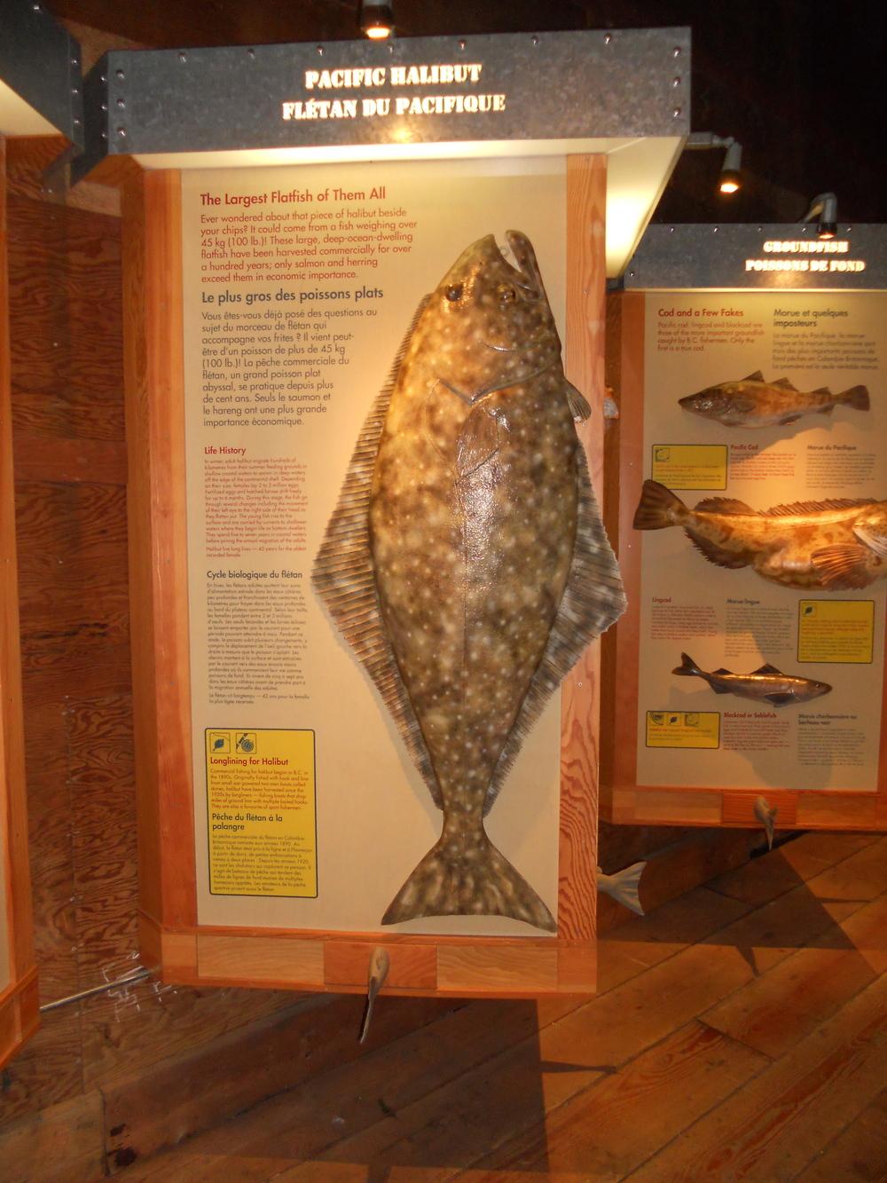 GOGC fish gallery 11.JPG
