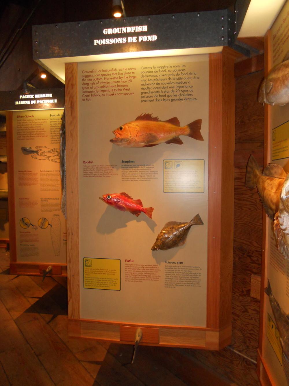 GOGC fish gallery 12.JPG