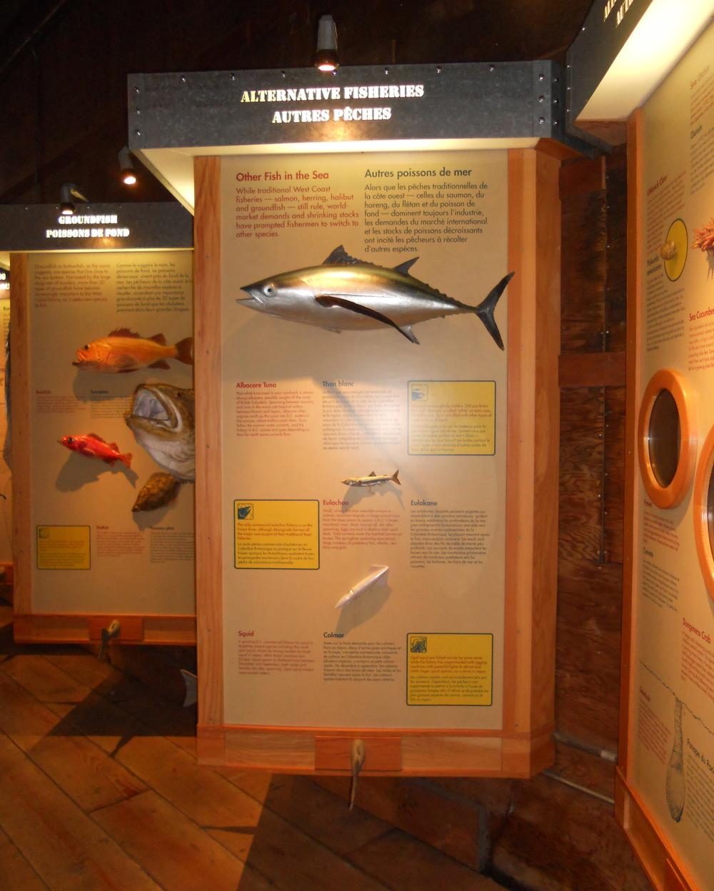 GOGC fish gallery 13.JPG