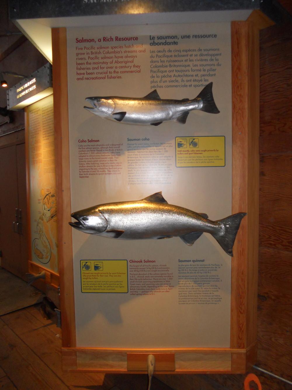 GOGC fish gallery 10.JPG