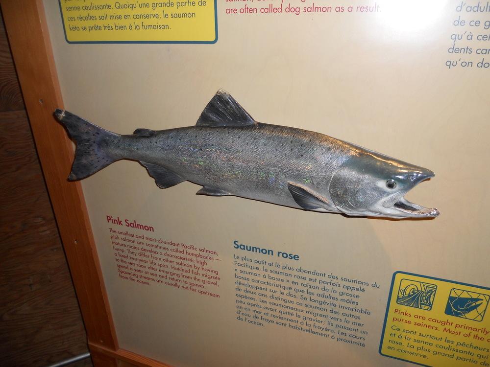 GOGC fish gallery 7.JPG