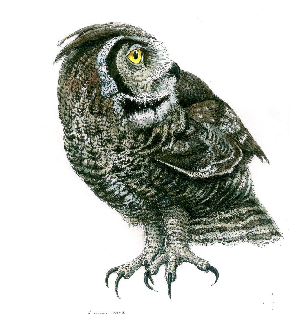 website  owl243.jpg