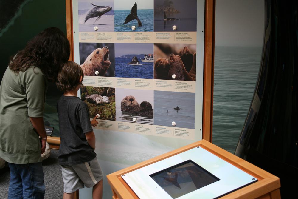 kwisitis marine mammal 1-sm.jpg
