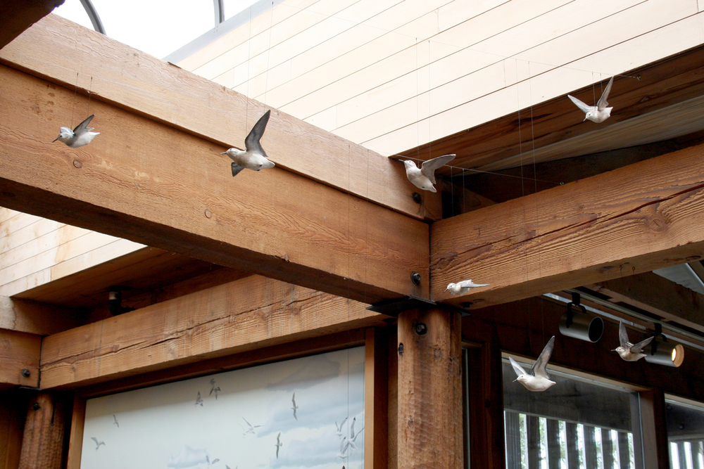 kwisitis migrating birds 1-adj-sm.jpg