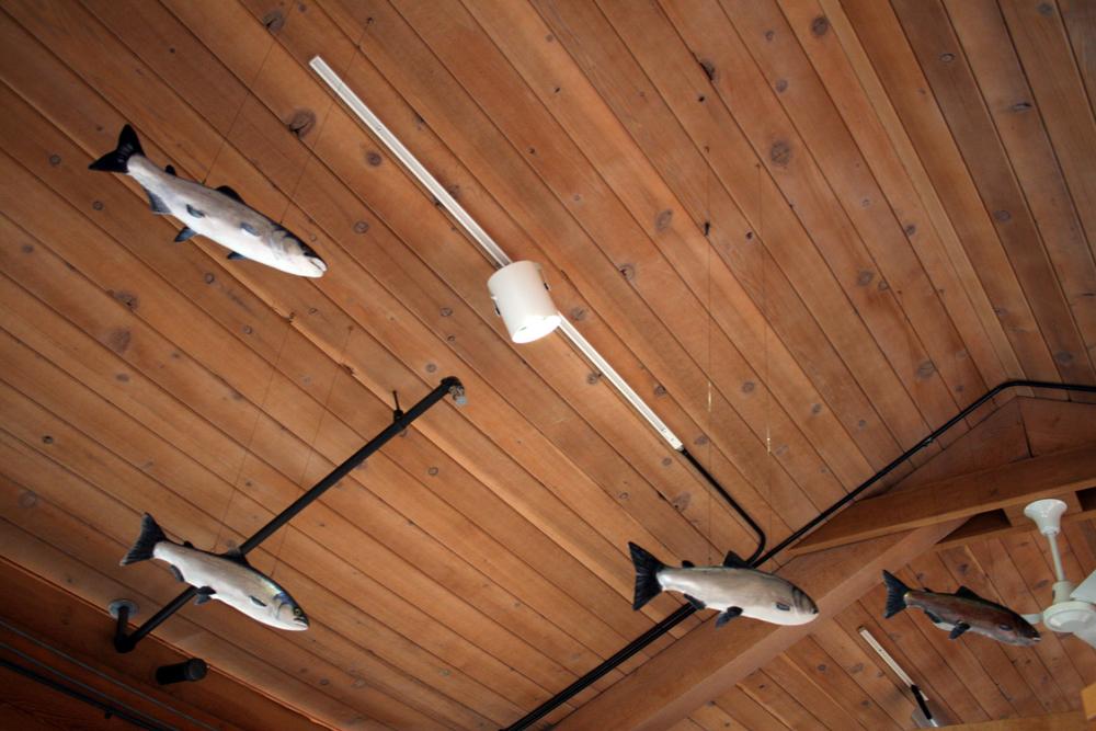 kwisitis salmon 3-adj-sm.jpg